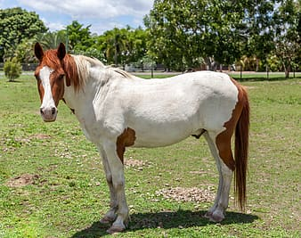 White and brown horse on green grass field during daytime
