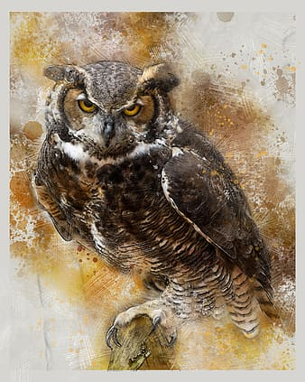 Brown and black owl painting