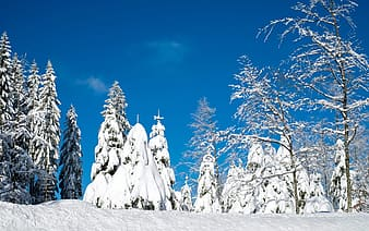 Snow-covered trees during daytime