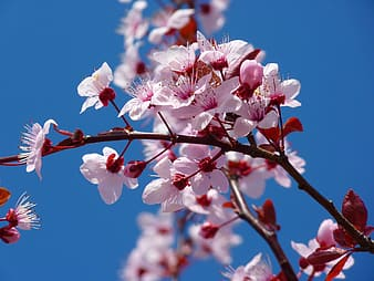 Macro shot of blossom flowers