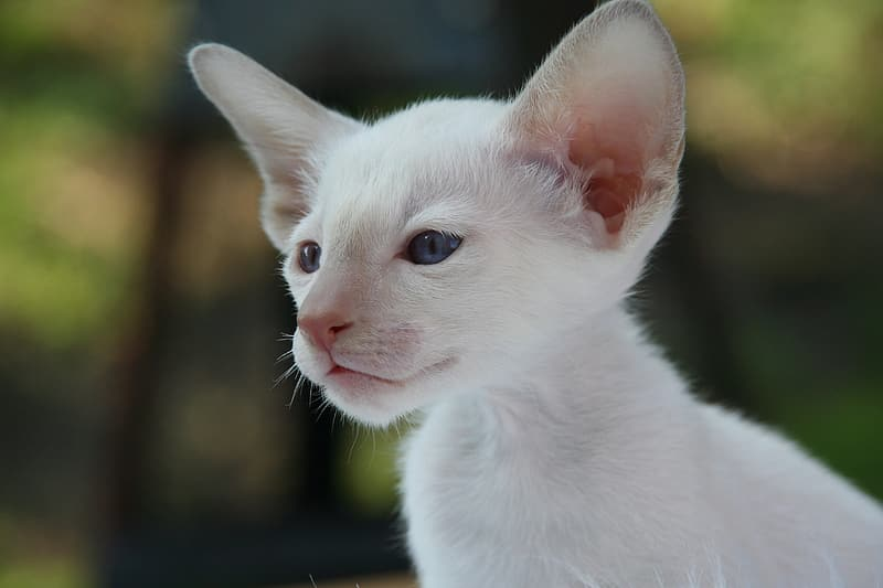 White kitten in close-up photo