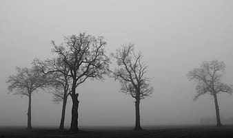 Withered trees with fogs