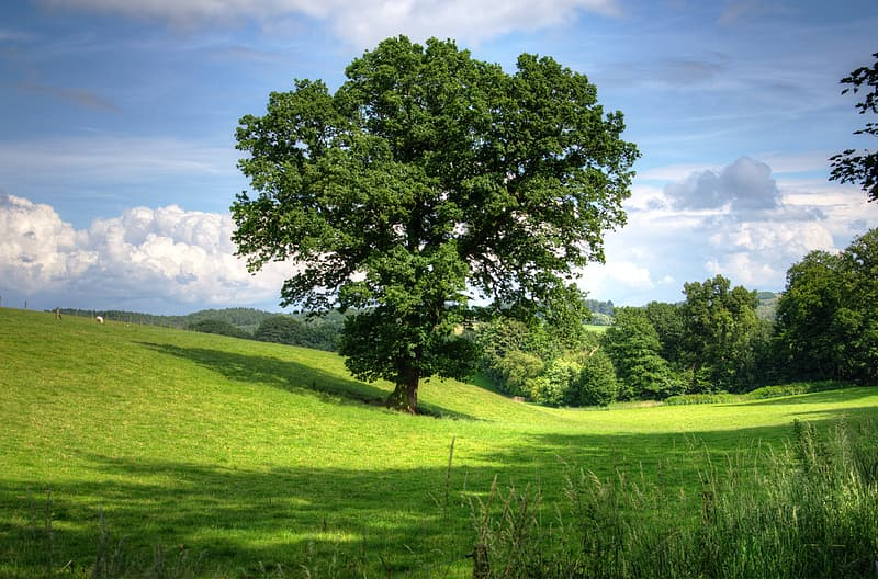 Green grass land and trees