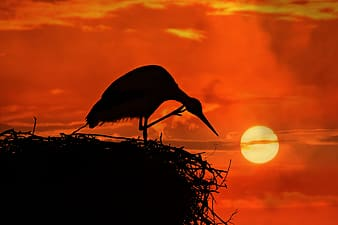 Silhouette of bird on nest during sunset
