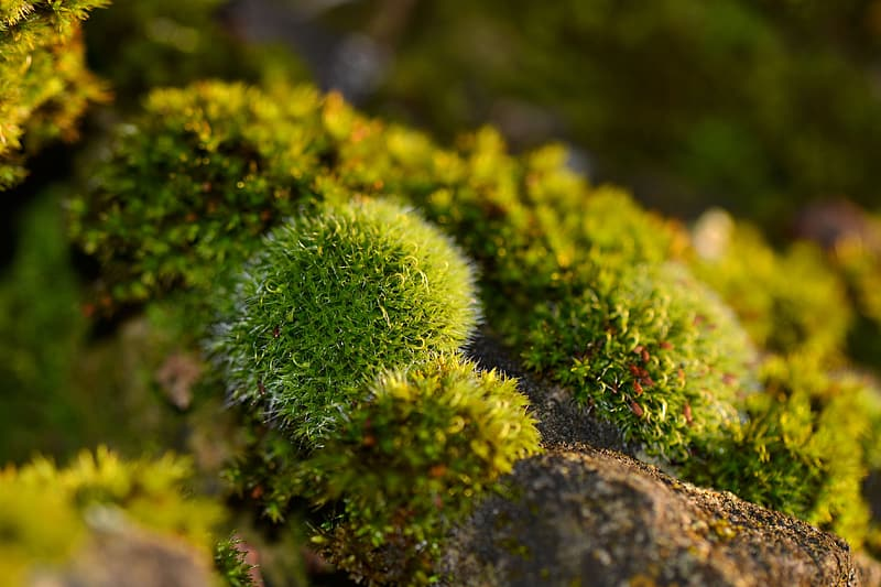 Shallow focus of green plant