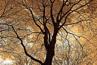 Low-angle photography of tall brown tree at daytime