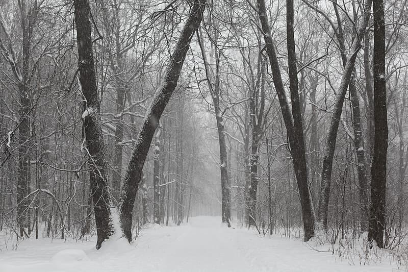 Photo of leafless trees during winter season