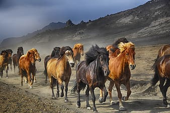 Assorted horses near rocky mountain during daytime