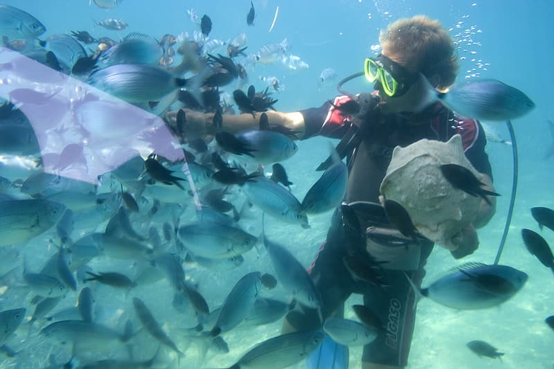 Man underwater surrounded with school of fish