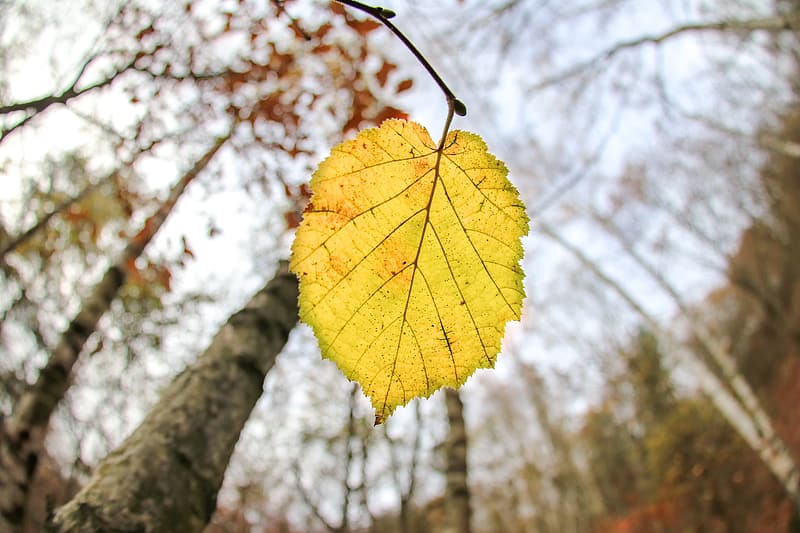 Yellow leaf on brown tree branch