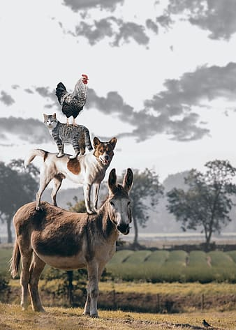Black and white rooster on black and white cat on white and tan dog on black and brown donkey under white clouds