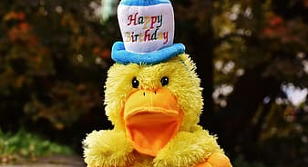 Yellow duck wearing white and blue hat