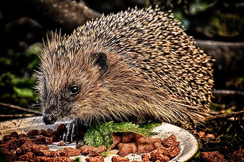 Hedgehog on green and brown leaves