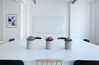 Three succulent plants on white wooden table inside room