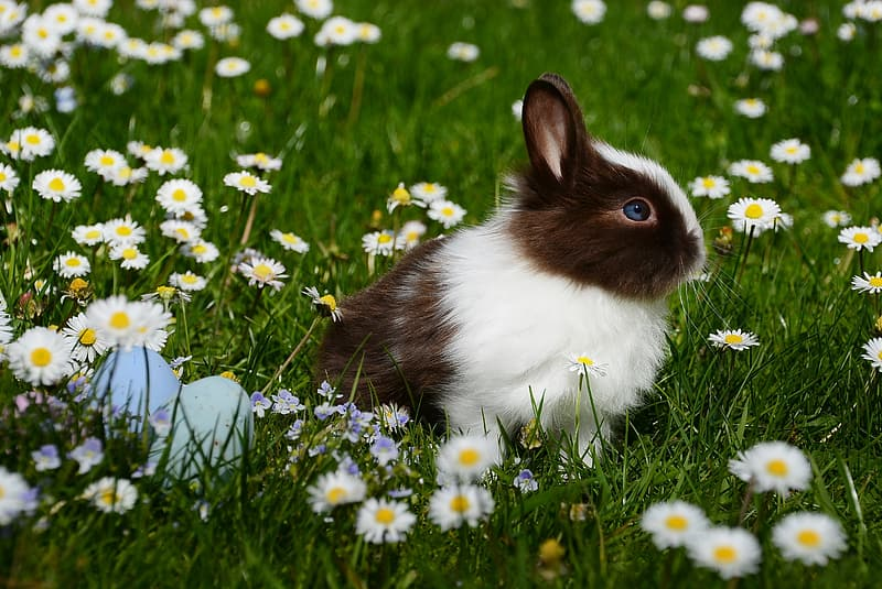 White and black rabbit near white flowers during daytime