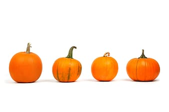 Four orange pumpkins