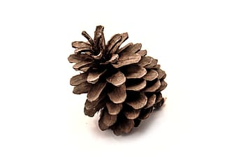 Pinecone on white surface