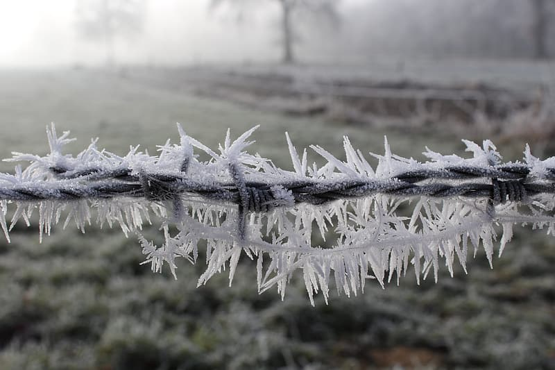 Photo of frosted barbed wire