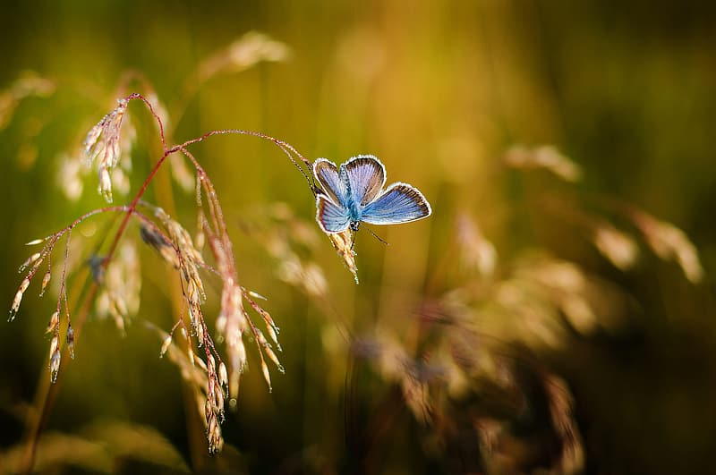Blue and black butterfly on green plant