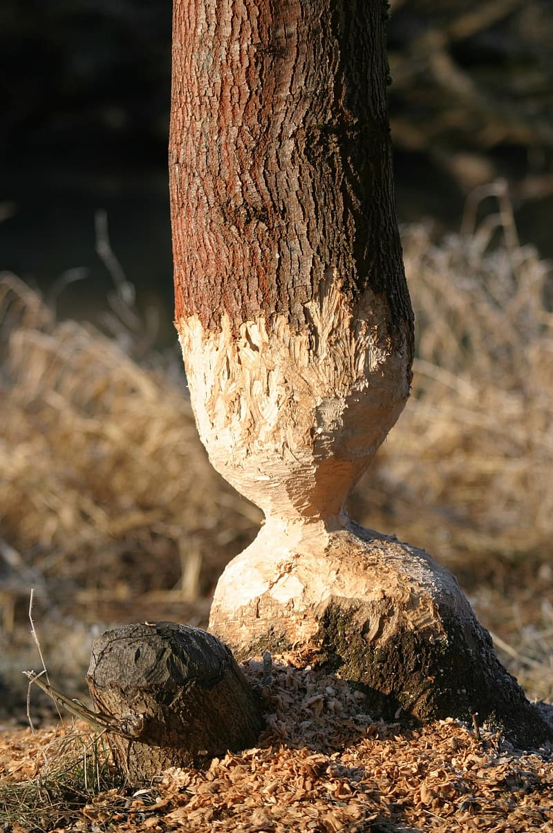 Brown tree trunk on brown grass