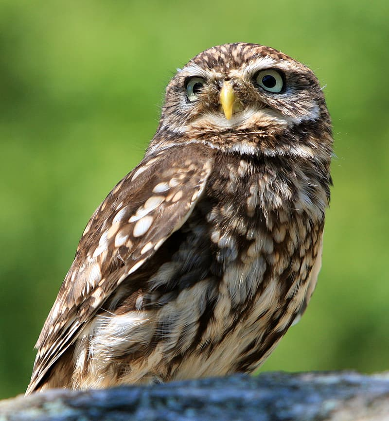 Shallow focus photography of brown owl