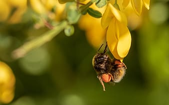 Bee on yellow flower close-up photography