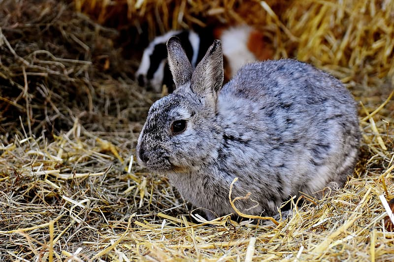 Selective focus photography of gray rabbit