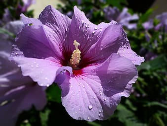 Purple flower with water droplets