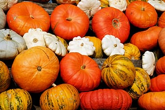 White, brown, and red squash lot