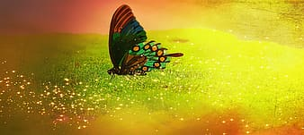 Green and red butterfly illustration