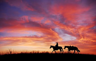Silhouette of 2 horses on grass field during sunset