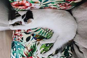 White and black cat on green and white floral textile