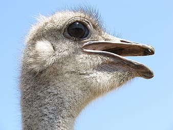 Closed up photo of ostrich head