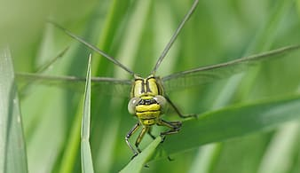 Shallow focus photography of green dragonfly
