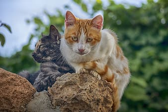 Orange and white cat on brown rock