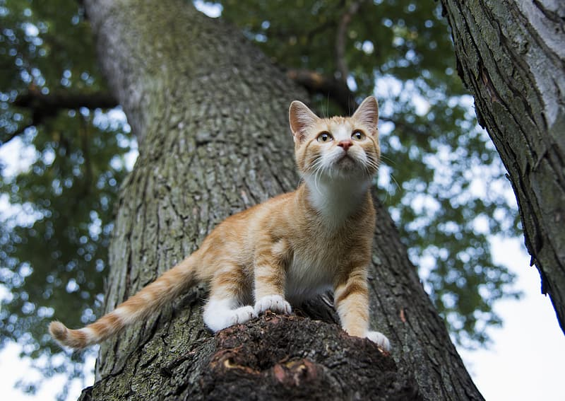 Orange tabby cat on tree