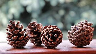 Selective focus photography of four pine cones on brown board