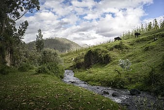 Green grass field with river under white clouds