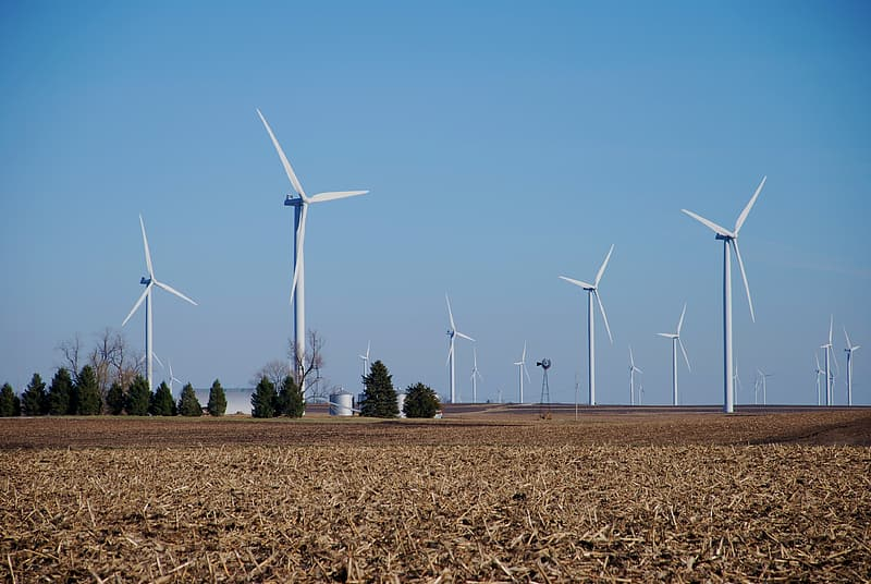 White windmills beside trees during daytime
