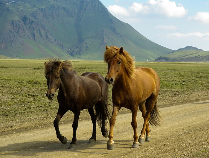 Black and brown horses