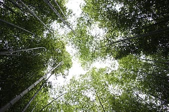 Worm's eyeview of green trees during daytime