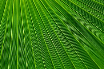 untitled, abstract, background, backgrounds, botany, color, detail, foliage, green, leaf
