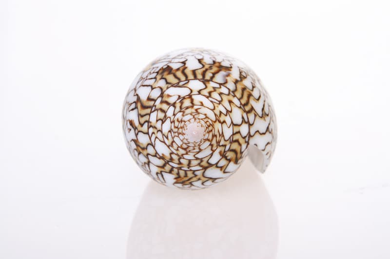 White and brown floral egg ornament
