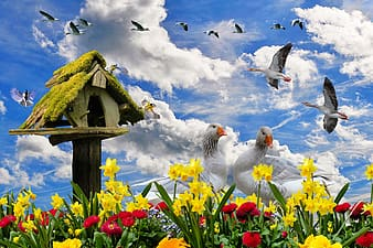 Flock of ducks with flowers at daytime