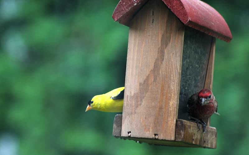 Yellow and black bird on brown wooden bird house