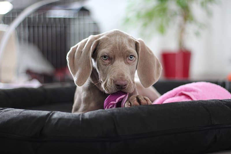 Shallow focus photography of brown puppy