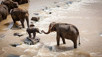 Elephants on streams during daytime