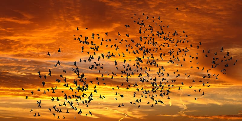 Silhouette photography of flock of flying birds