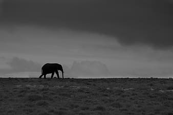 Grayscale photo of animal