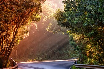 Green trees beside road during daytime